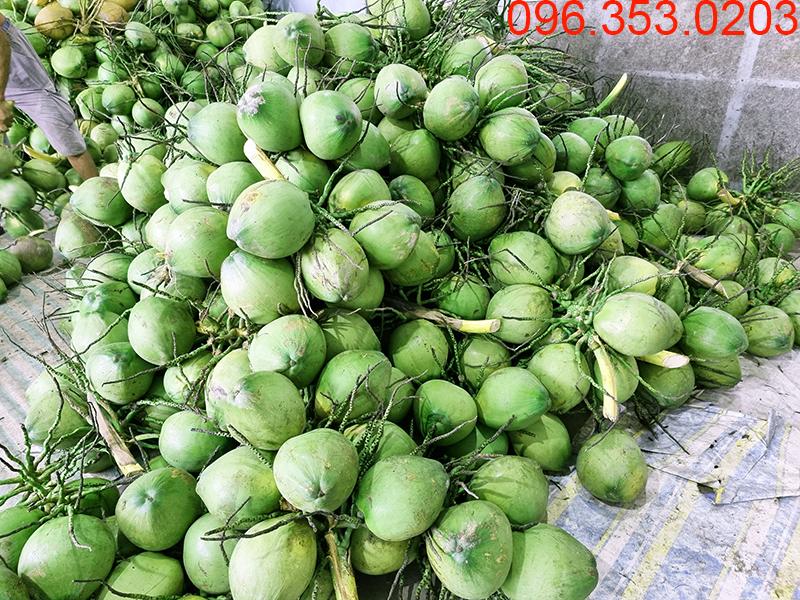 Giao buôn dừa tươi số lượng lớn và Đại lý dừa xiêm xanh Miền Nam